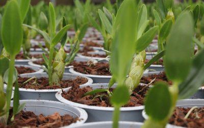 Wooning Orchids behaalt MPS ProductProof certificering
